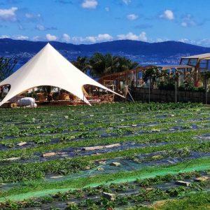 54-Restaurantes-Potus-Restaurante-Atracciones-Chiringuito-O-Grove